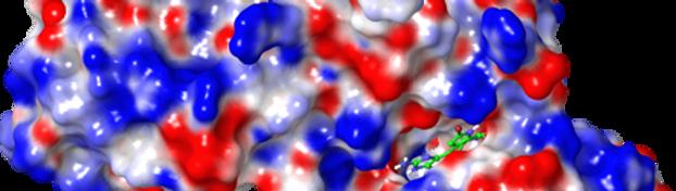 maestro_molecular_surface_esp.png