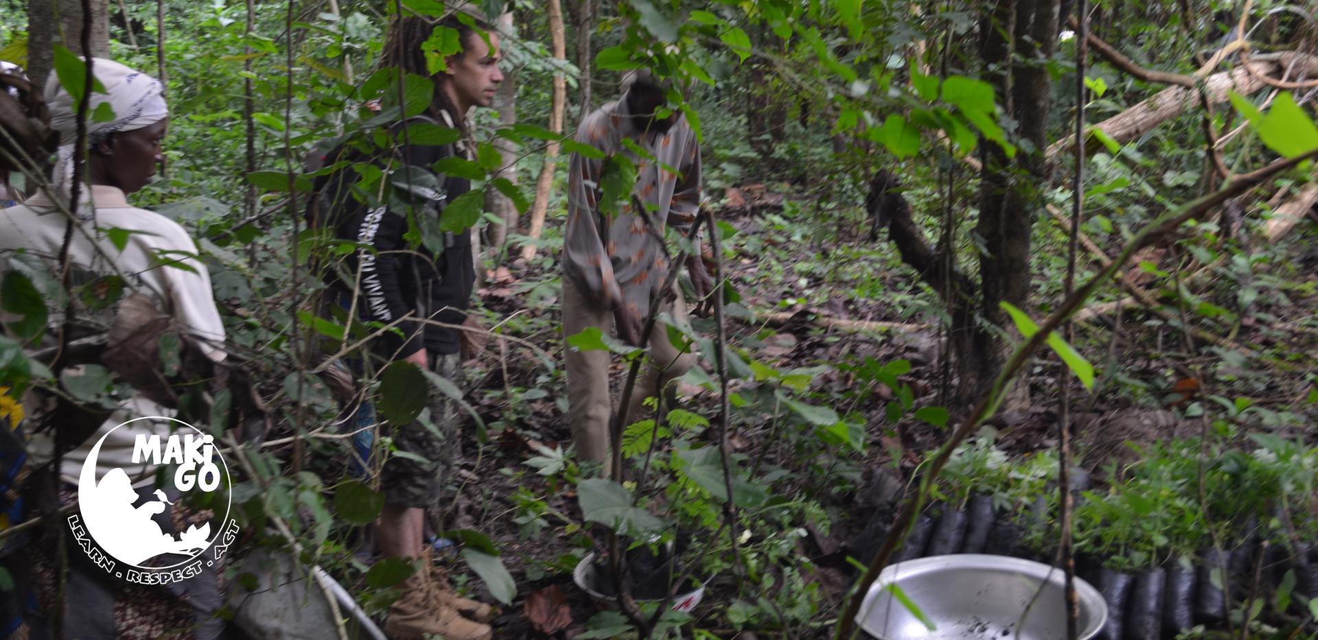 Reboisement de la Forêt de Kikele, Bénin. 1er juin 2018