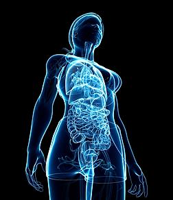 gastroenteric nervous system.png