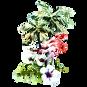 Tropical Flores y Flamenco