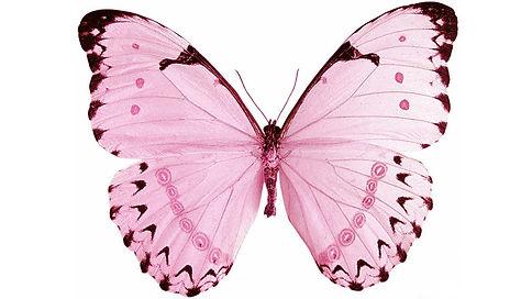 роз бабочка.jpg