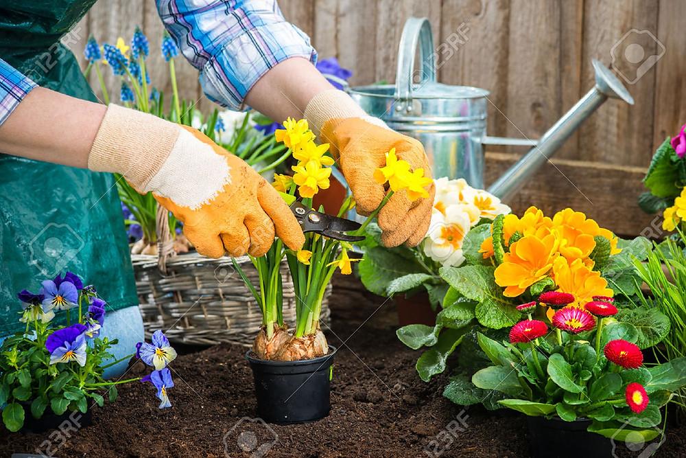 Cuida tu jardín con Gestió Integral