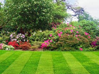 Limpieza y mantenimiento de jardines y zonas comunitarias (6 claves imprescindibles)