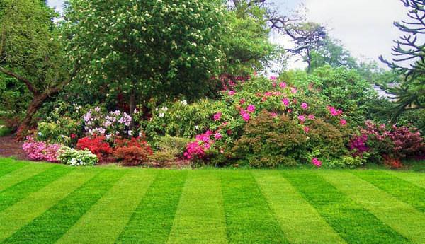 Limpieza y cuidado de zonas verdes