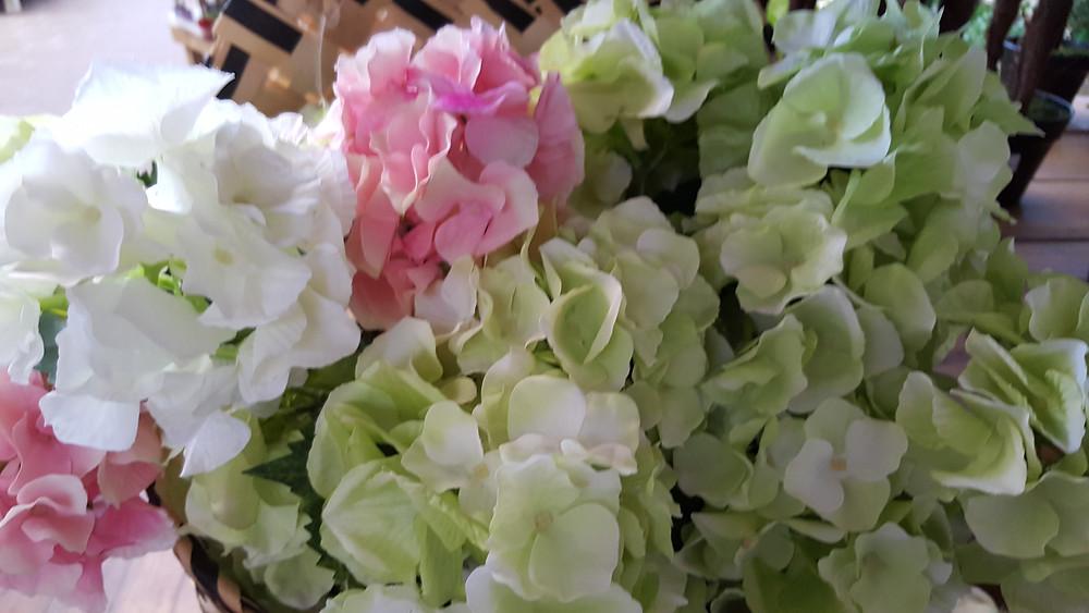 Plantas de interior. Azalea