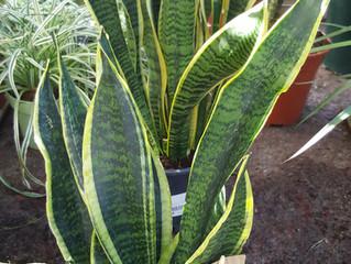 Las mejores plantas para decorar tu casa