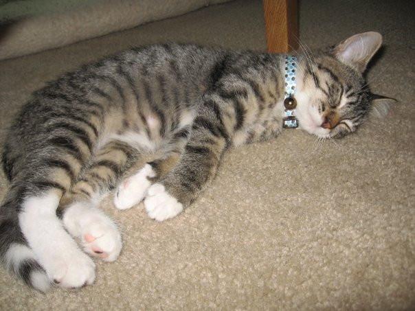 lewis kitten