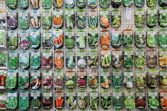 semences légumes et fleurs