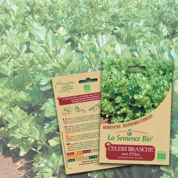 semences-bio-reproductibles-celeri-branc