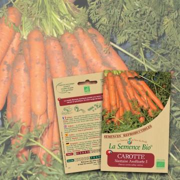 semences-bio-reproductibles-carotte-nant