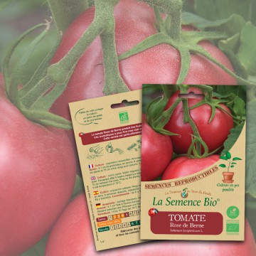 semences-bio-reproductibles-tomate-rose-
