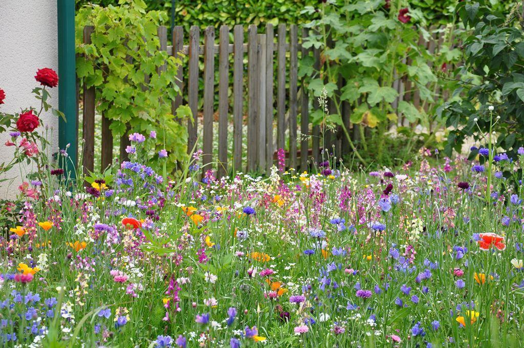 prairie fleurie 2.jpg