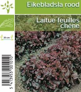laitue feuilles de chêne rouge 6 pièces