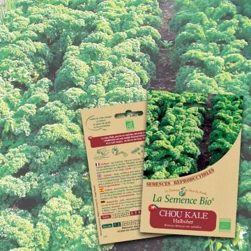 semences-bio-reproductibles-chou-kale-ha