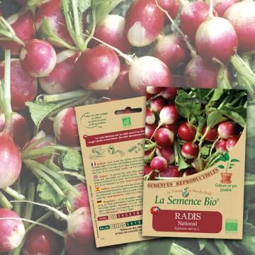 semences-bio-reproductibles-radis-nation