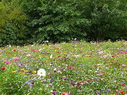prairie fleurie.jpg