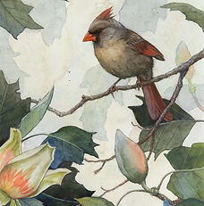 Alex-Warnick-Northern-Cardinal-and-Tulip