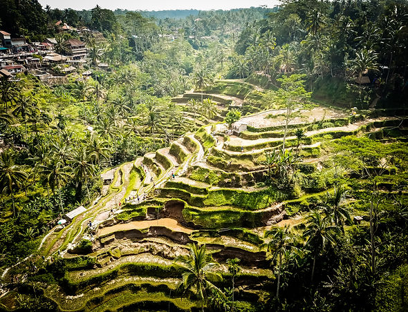 Tegalalang Rice Terraces, Ubud, Bali. Ono Vita