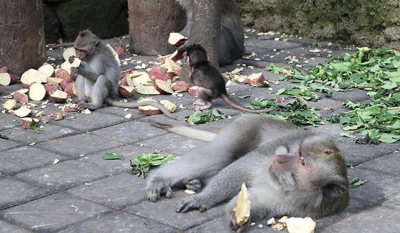 Sacred Monkey Forest Sanctuary, Ubud, Bali. Ono Vita