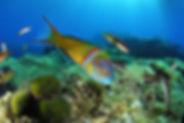 Lancez-vous dans une formation courte et repartez avec une carte de plongeur internationale valable dans le monde entier. Durant 3 plongées vous apprendrez les bases de la plongée en bouteille. Chaque plongée dure environ 30 min. Que du plaisir !  Quelques exercices en début de séance pour vous sentir à l'aise et une longue balade sous marine pour développer votre aisance et surtout observer les poissons !