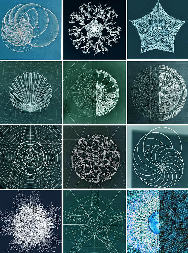 ocean collage.jpg