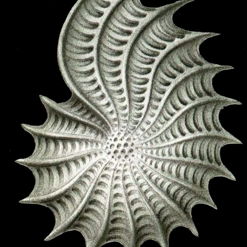 Freehand Formations of Seashells ~ Online