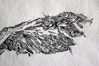 owl wing
