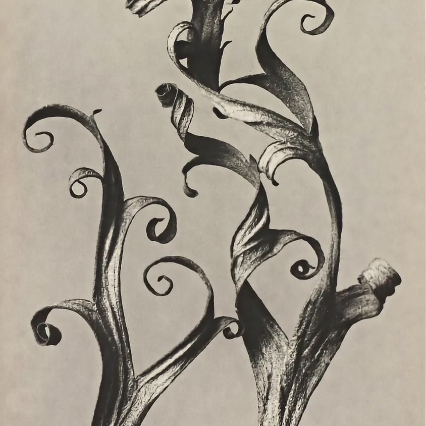 Abstract Botanical Drawing