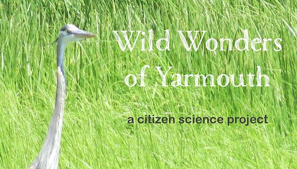 WWF-heron-heading.png