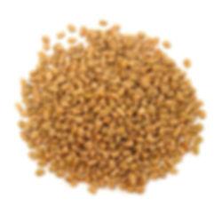 fenugreek-seeds.jpg