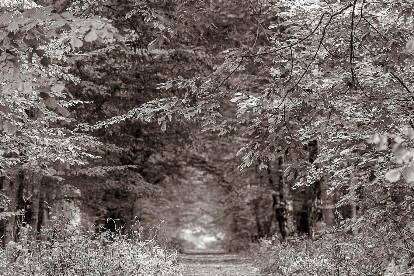 Bialowieza-La Foresta Ferita