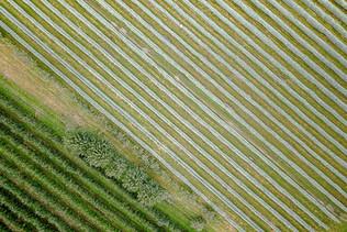 Coltivazione Mele Fotografia Aerea Arezzo