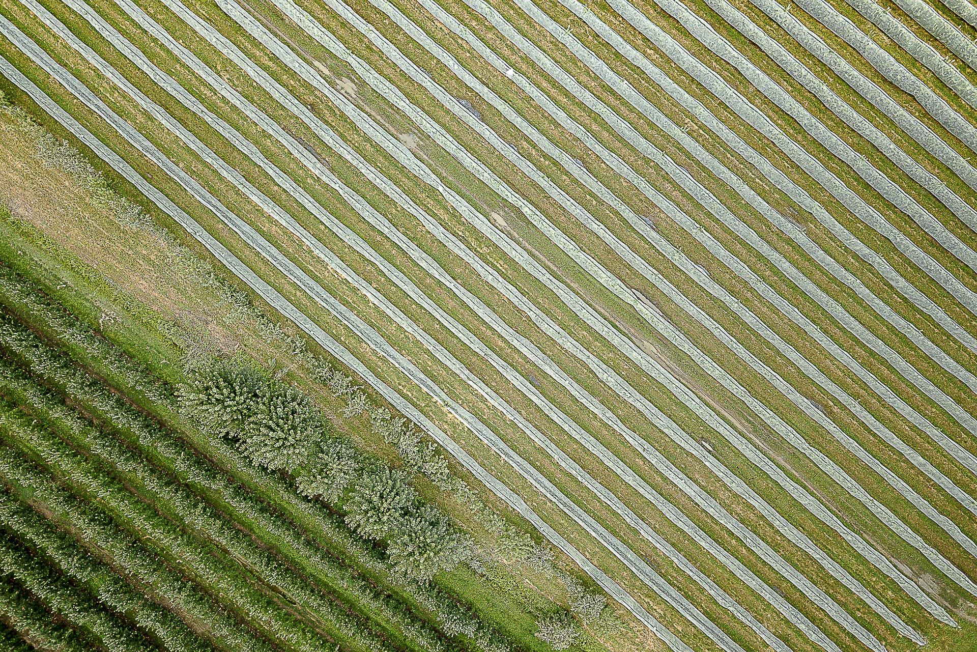 Fotografia Industria primaria Agricoltura Fotografo