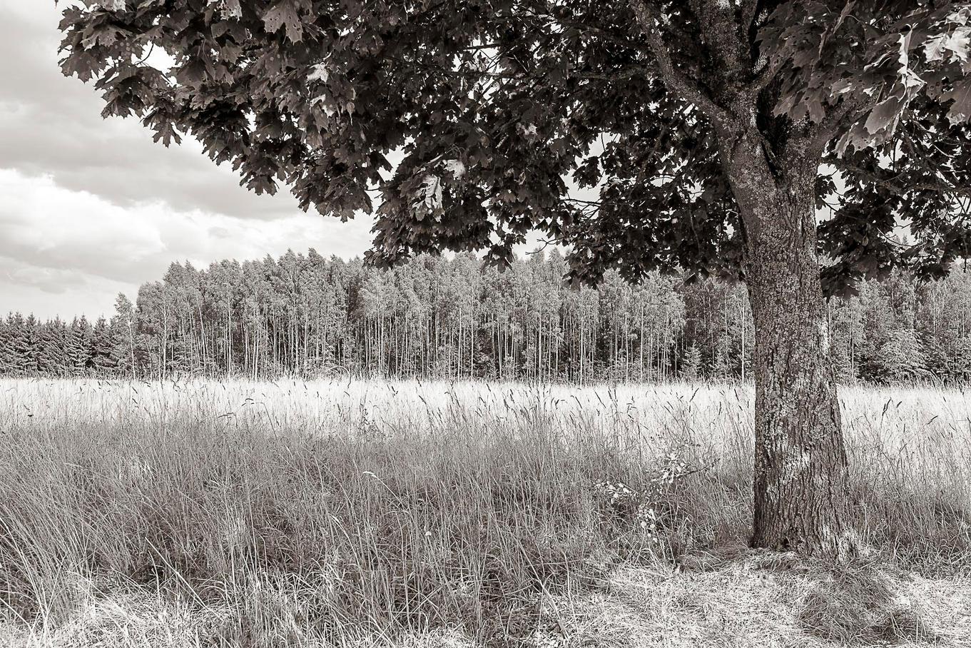 Bialowieza-La Foresta Ferita - 2015