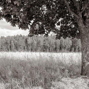 Bialowieza - La Foresta Ferita 2015