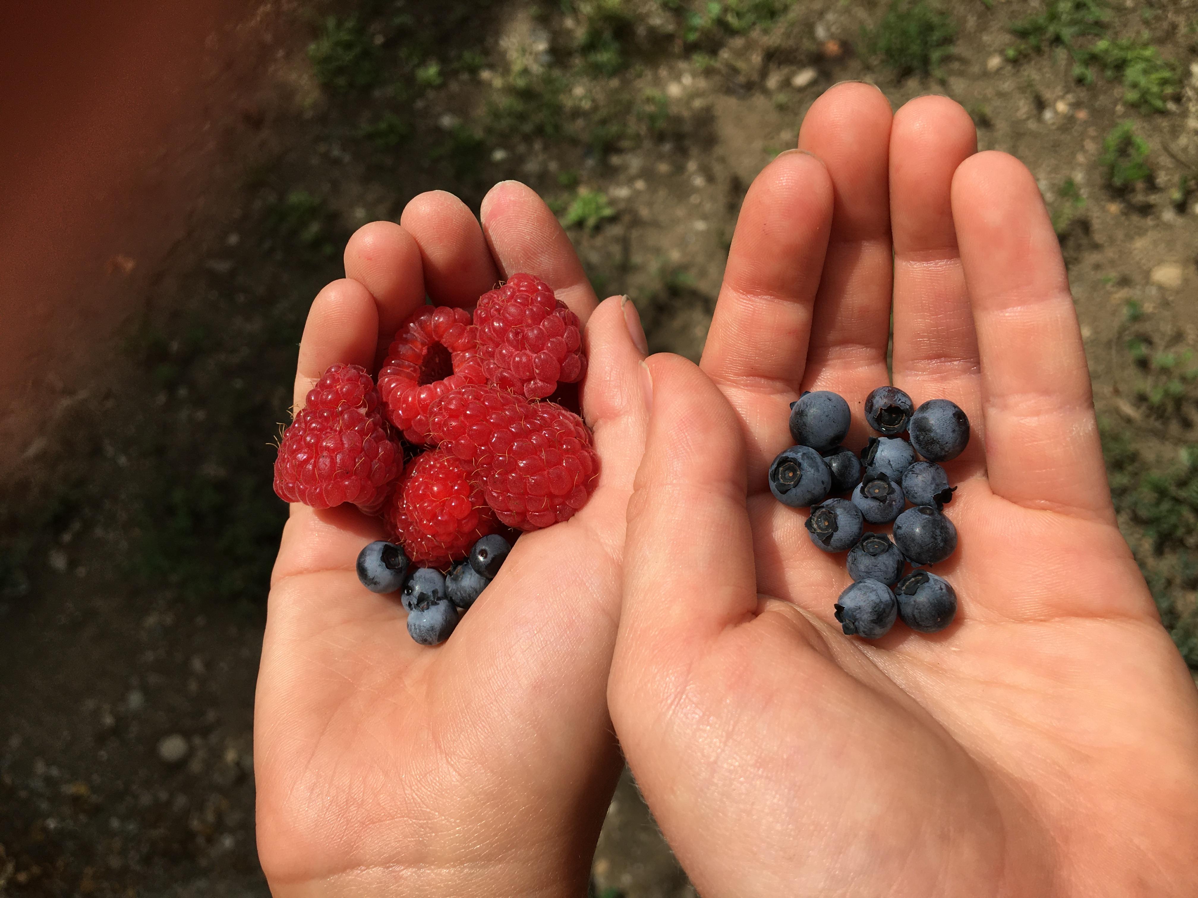 Hoferhof - frische Früchte