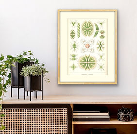 Antique botanical prints. Algae_Hallway.jpg