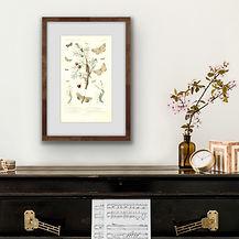Fischer Arts Framed Engravings