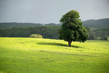Kauai Nature Photography.jpg