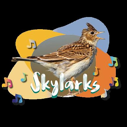 Skylarks class.png