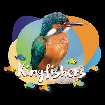 Kingfishers class.png