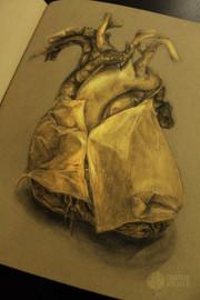 Pericardium Sketch