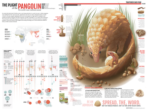 The Plight of the Pangolin