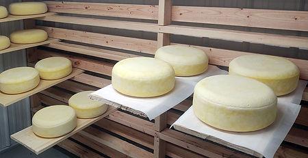 Cheese9.jpg