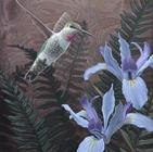 Annas Hummingbird and Douglas Iris