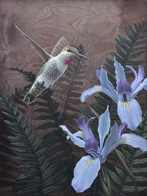 Copy of Annas Hummingbird and Douglas Ir