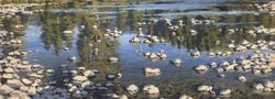 Jarvela-Remembering Monet