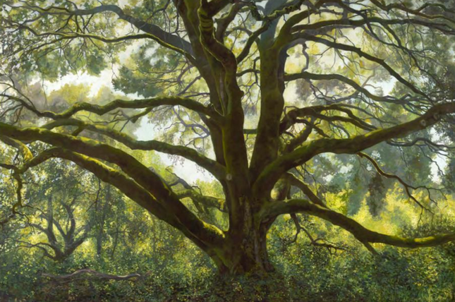 Memorial Oak