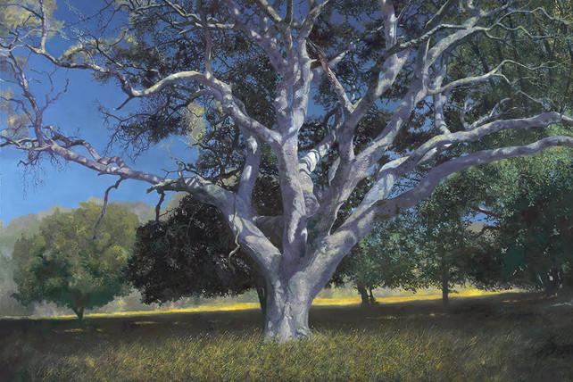 Wolpert-Coral Oak, oil on canvas, 48 x 72_ $18,000.jpg