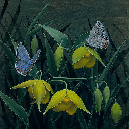 Diogens Lanterns and Dotted-blue Butterf